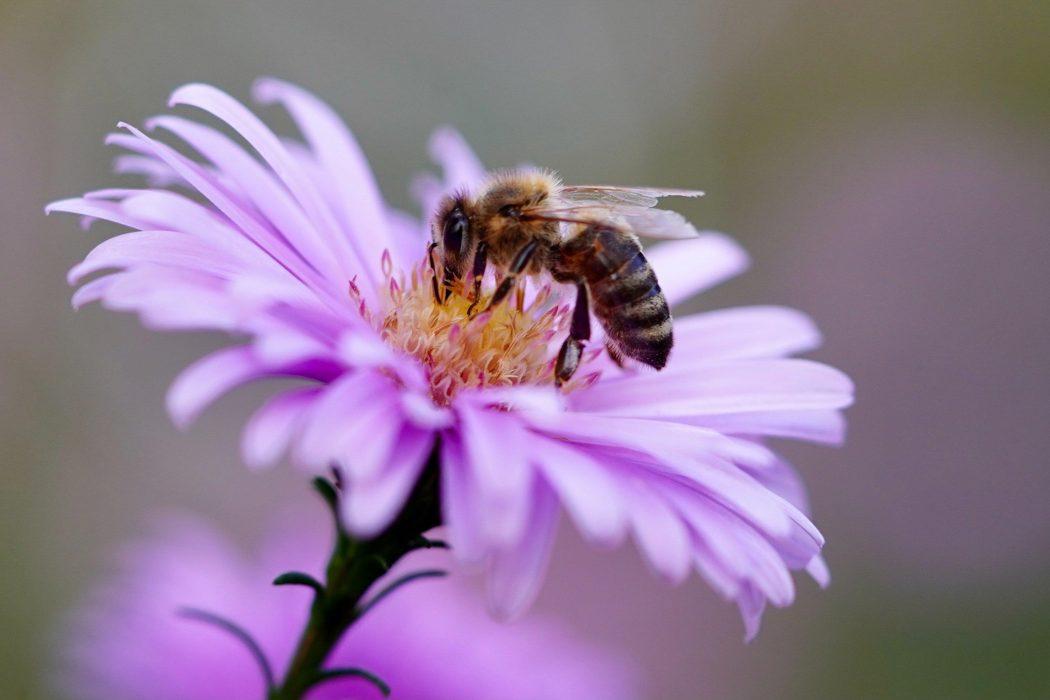 Bee 5618012 1